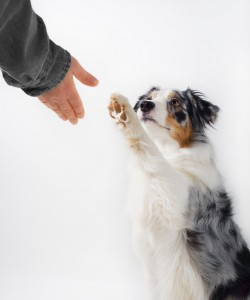 Dog and human handshake.